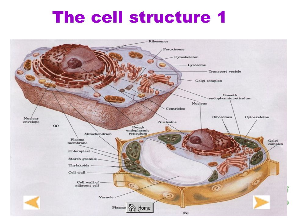 The cell structure 1