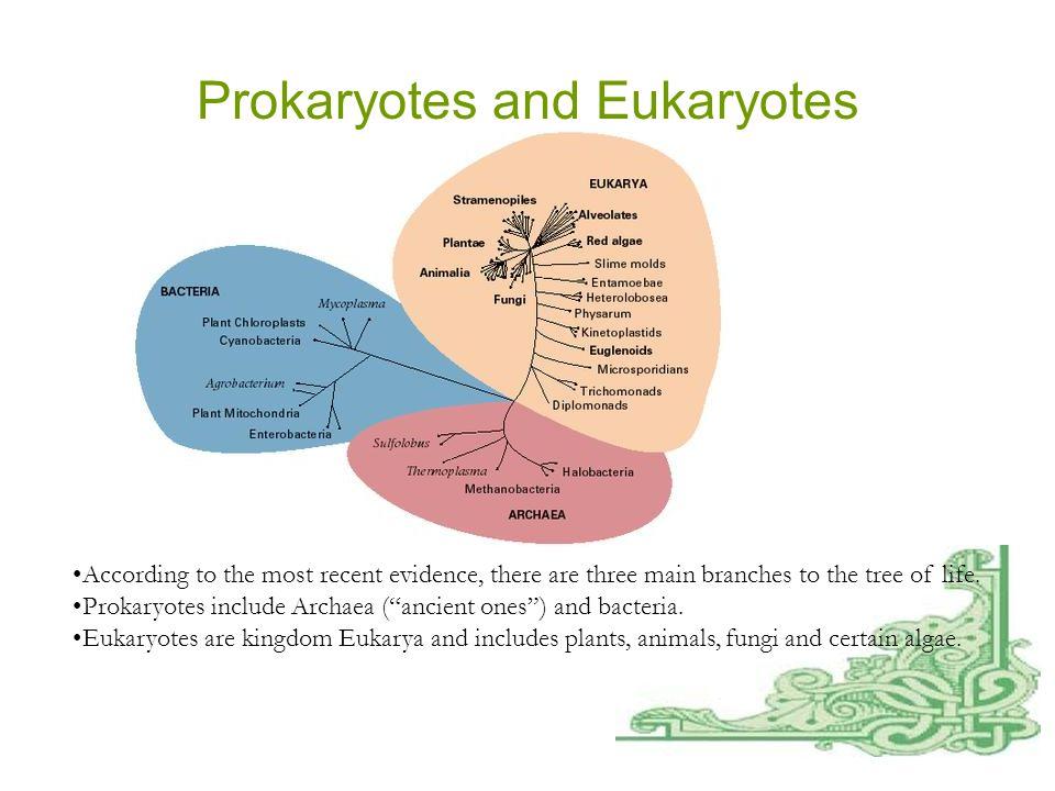 Prokaryotes and Eukaryotes, continued ProkaryotesEukaryotes Single cellSingle or multi cell No nucleusNucleus No organellesOrganelles One piece of circular DNAChromosomes No mRNA post transcriptional modification Exons/Introns splicing