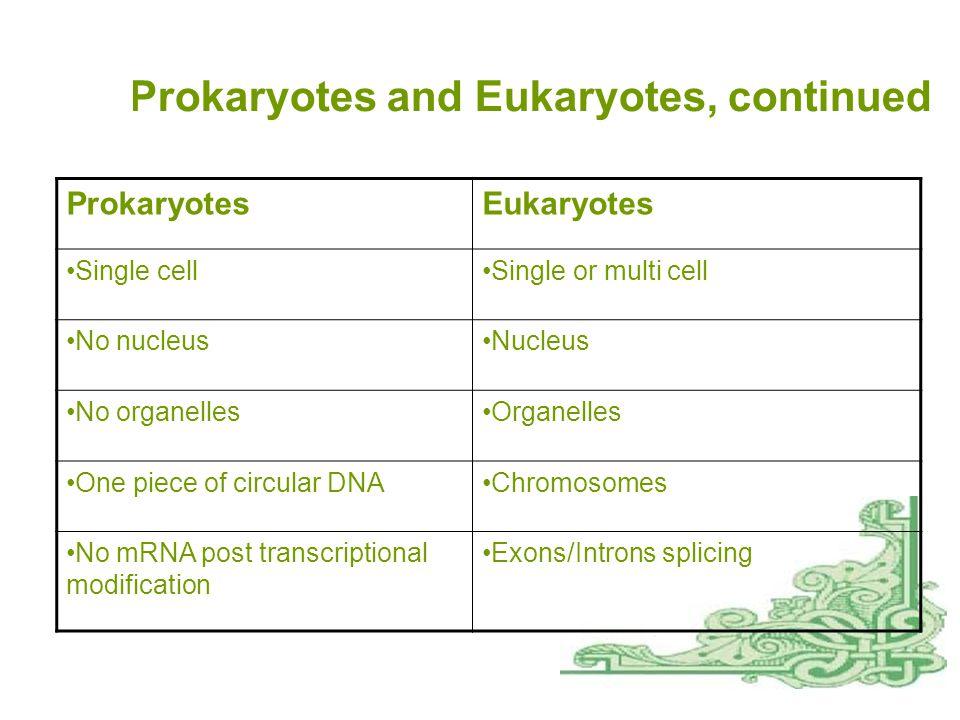 A1 Prokaryotes  Prokaryotes  Cell structure  Bacterial cell walls