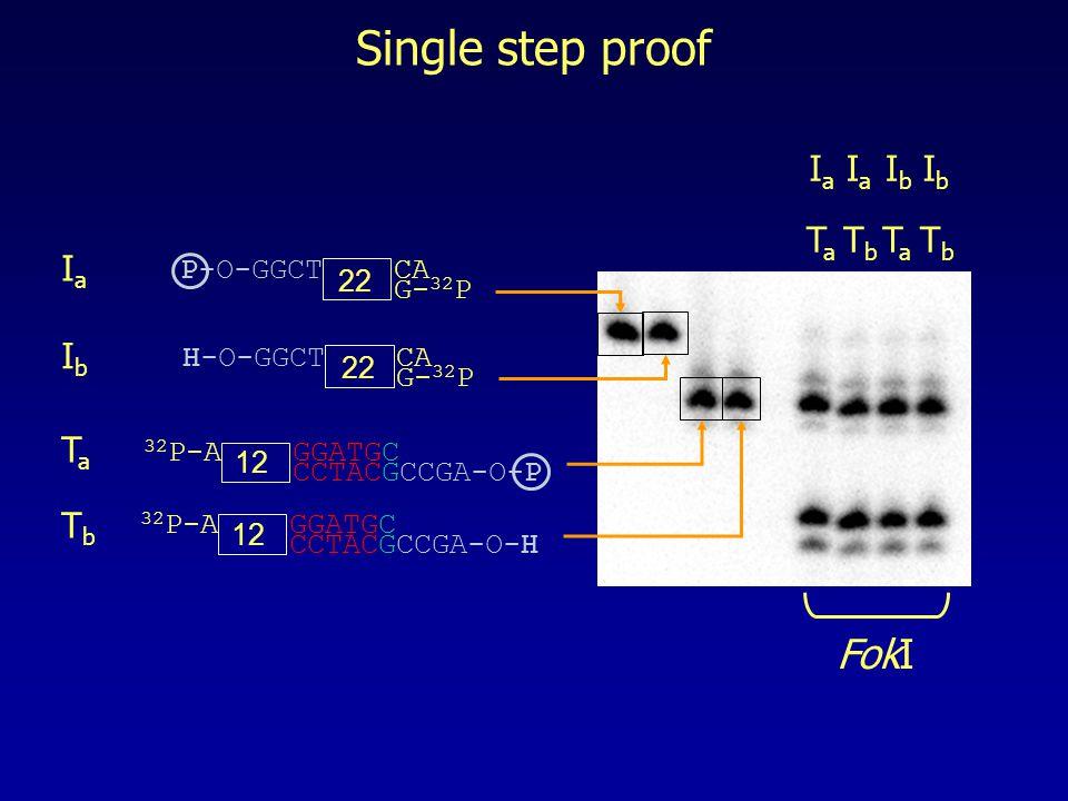Single step proof 32 P-A GGATGC CCTACGCCGA-O-P 12 P-O-GGCT CA G- 32 P 22 H-O-GGCT CA G- 32 P 22 32 P-A GGATGC CCTACGCCGA-O-H 12 IaIa IbIb TaTa TbTb IaIa TaTa IaIa TbTb IbIb TaTa IbIb TbTb FokI