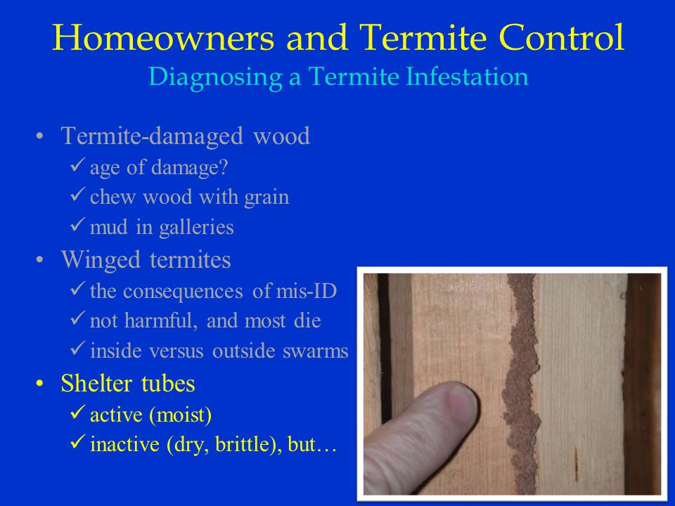Termite-damaged wood age of damage.
