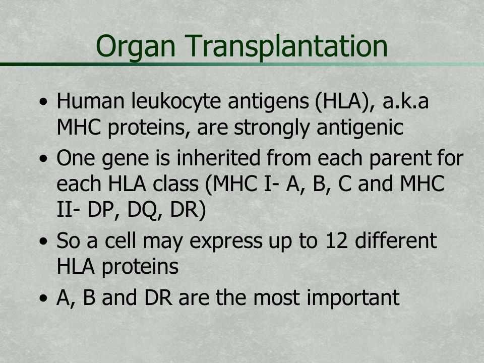 Organ Transplantation Human leukocyte antigens (HLA), a.k.a MHC proteins, are strongly antigenic One gene is inherited from each parent for each HLA c