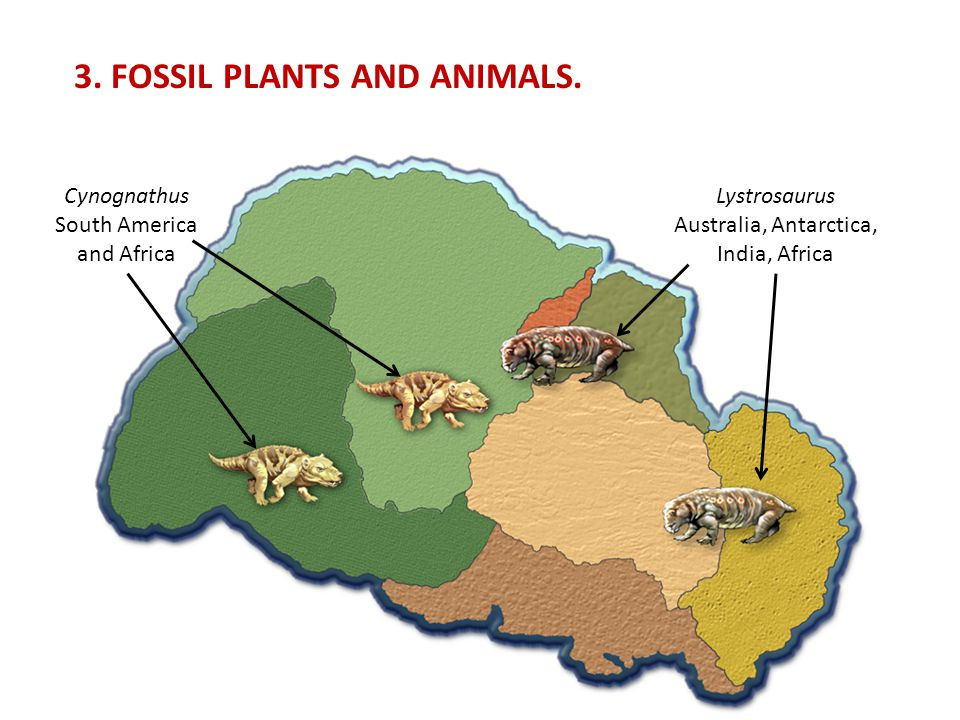 3. FOSSIL PLANTS AND ANIMALS.