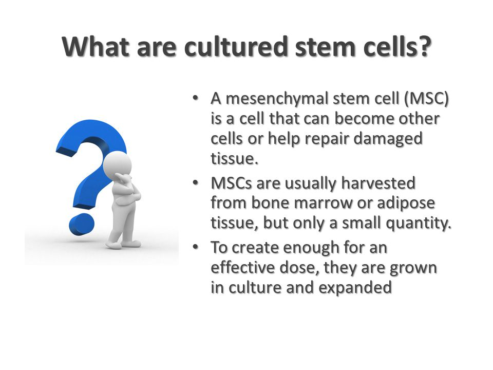 What are cultured stem cells.