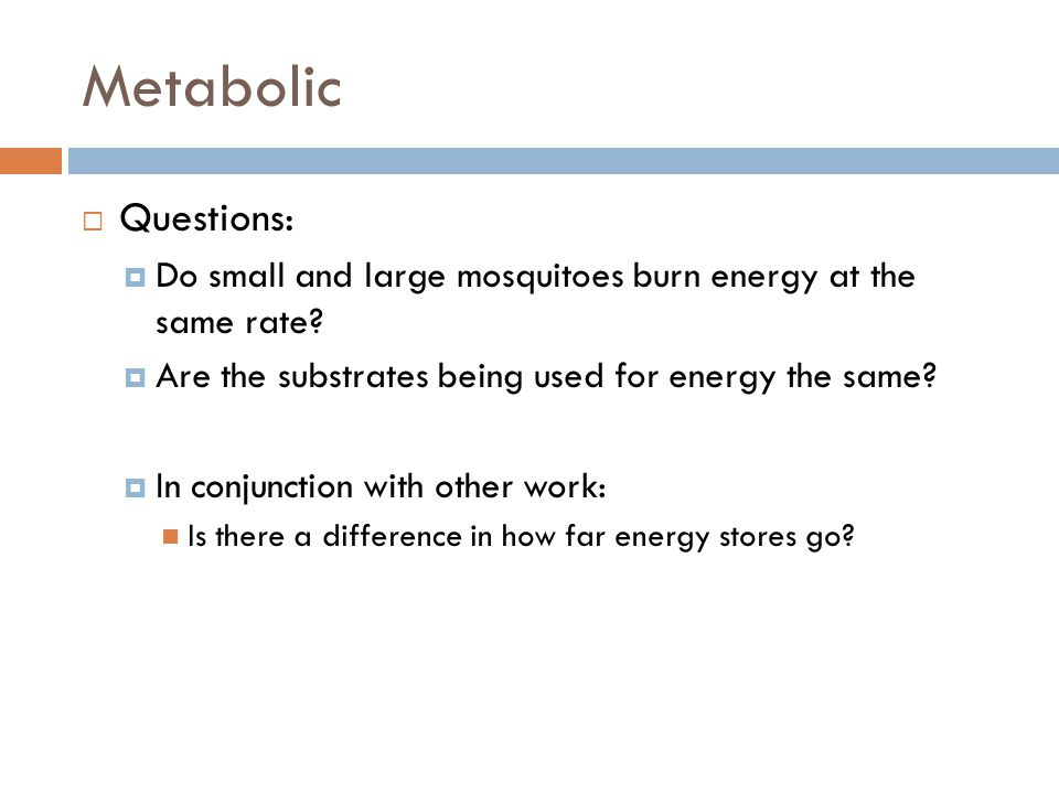 Metabolic  Questions:  Do small and large mosquitoes burn energy at the same rate.