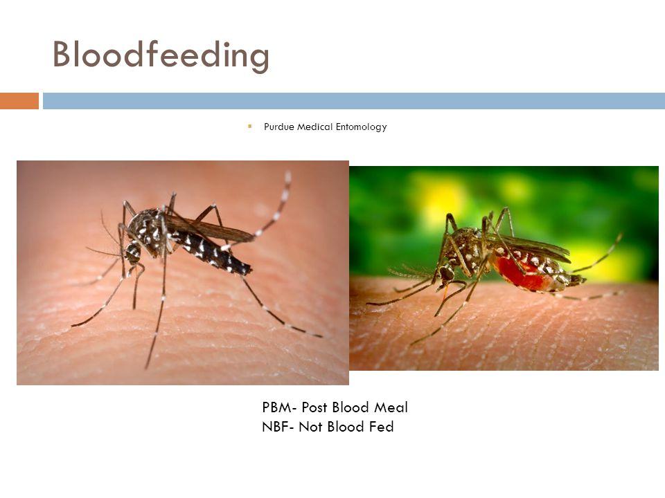 Bloodfeeding  Purdue Medical Entomology PBM- Post Blood Meal NBF- Not Blood Fed