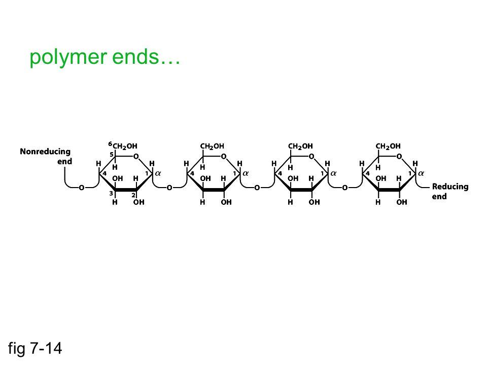 polymer ends… fig 7-14