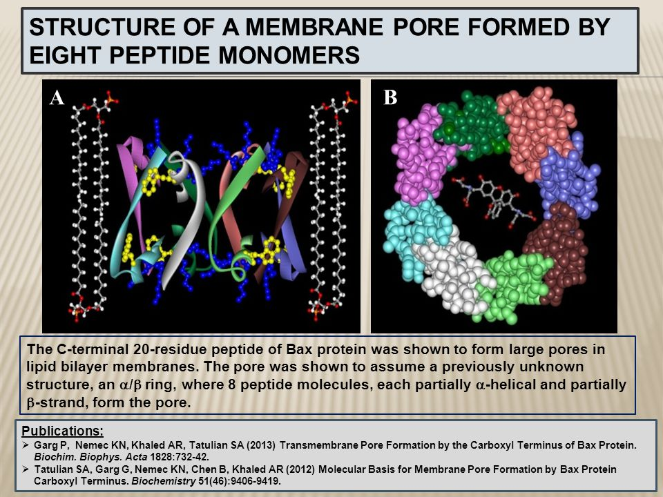 AB STRUCTURE OF A MEMBRANE PORE FORMED BY EIGHT PEPTIDE MONOMERS The C-terminal 20-residue peptide of Bax protein was shown to form large pores in lip