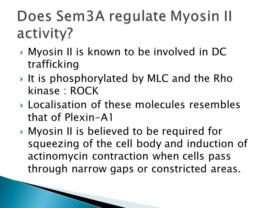  Myosin II is known to be involved in DC trafficking  It is phosphorylated by MLC and the Rho kinase : ROCK  Localisation of these molecules resembles that of Plexin-A1  Myosin II is believed to be required for squeezing of the cell body and induction of actinomycin contraction when cells pass through narrow gaps or constricted areas.