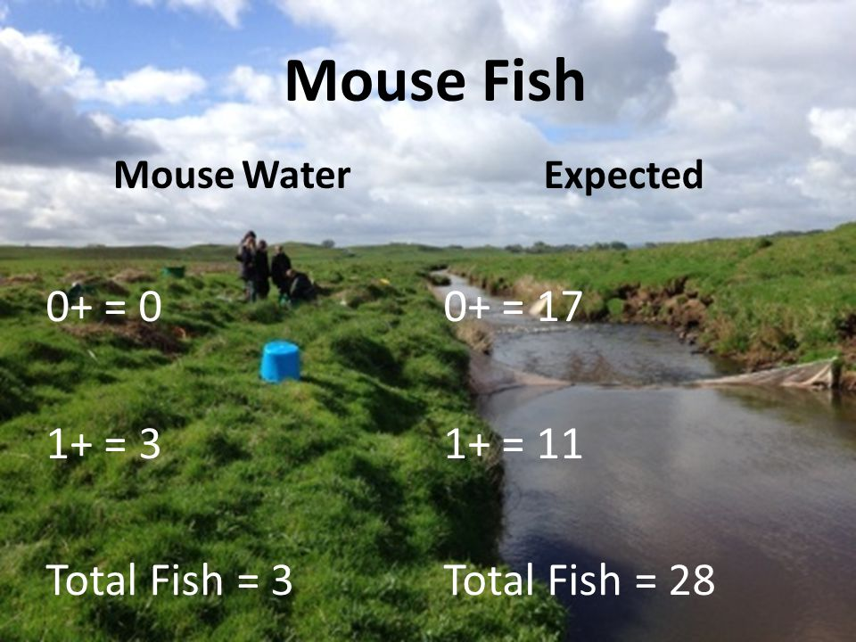 Mouse Fish Mouse Water 0+ = 0 1+ = 3 Total Fish = 3 Expected 0+ = 17 1+ = 11 Total Fish = 28