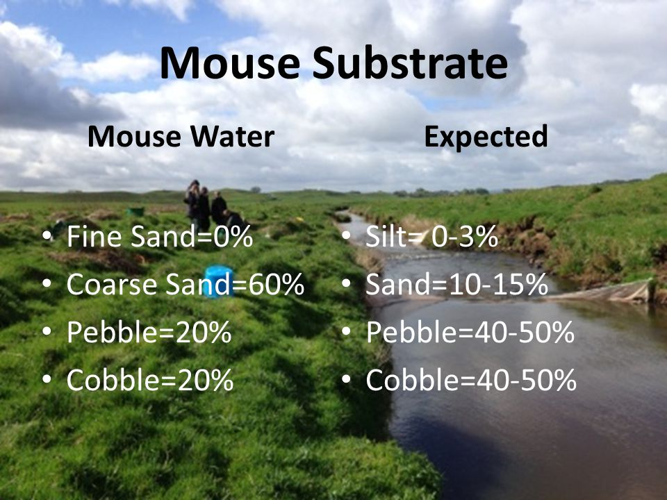 Mouse Water Pictures