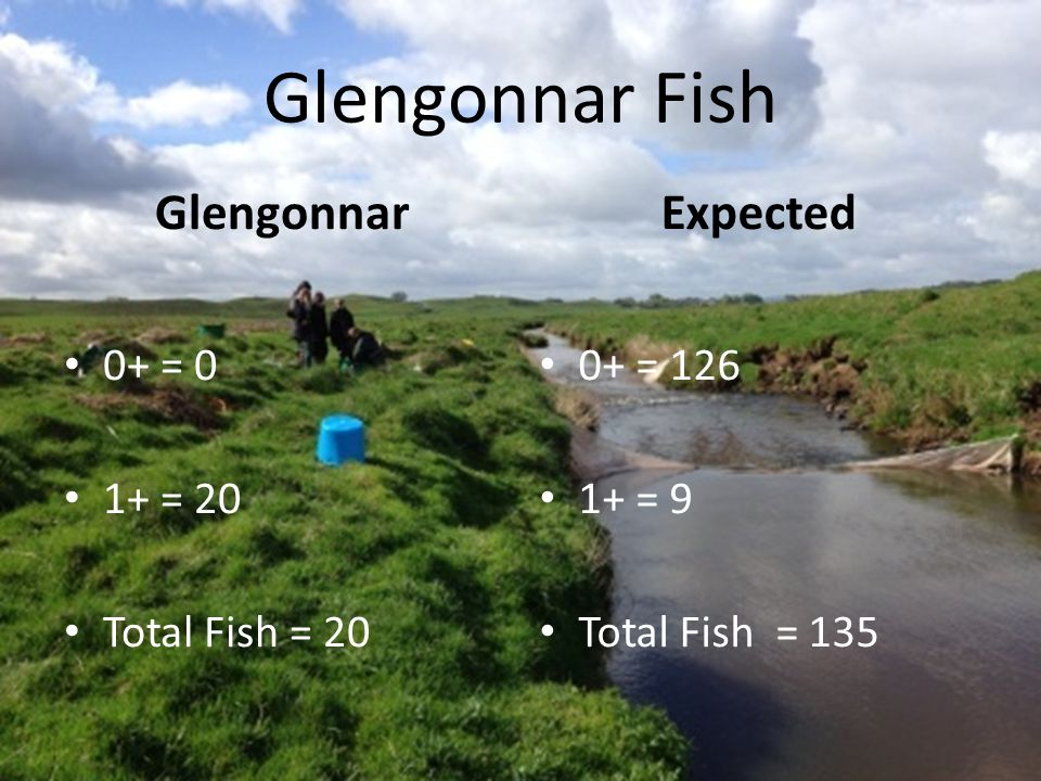 Glengonnar Fish Glengonnar 0+ = 0 1+ = 20 Total Fish = 20 0+ = 126 1+ = 9 Total Fish = 135 Expected
