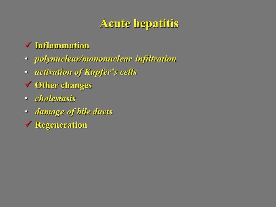 Acute hepatitis Inflammation Inflammation polynuclear/mononuclear infiltrationpolynuclear/mononuclear infiltration activation of Kupfer's cellsactivat