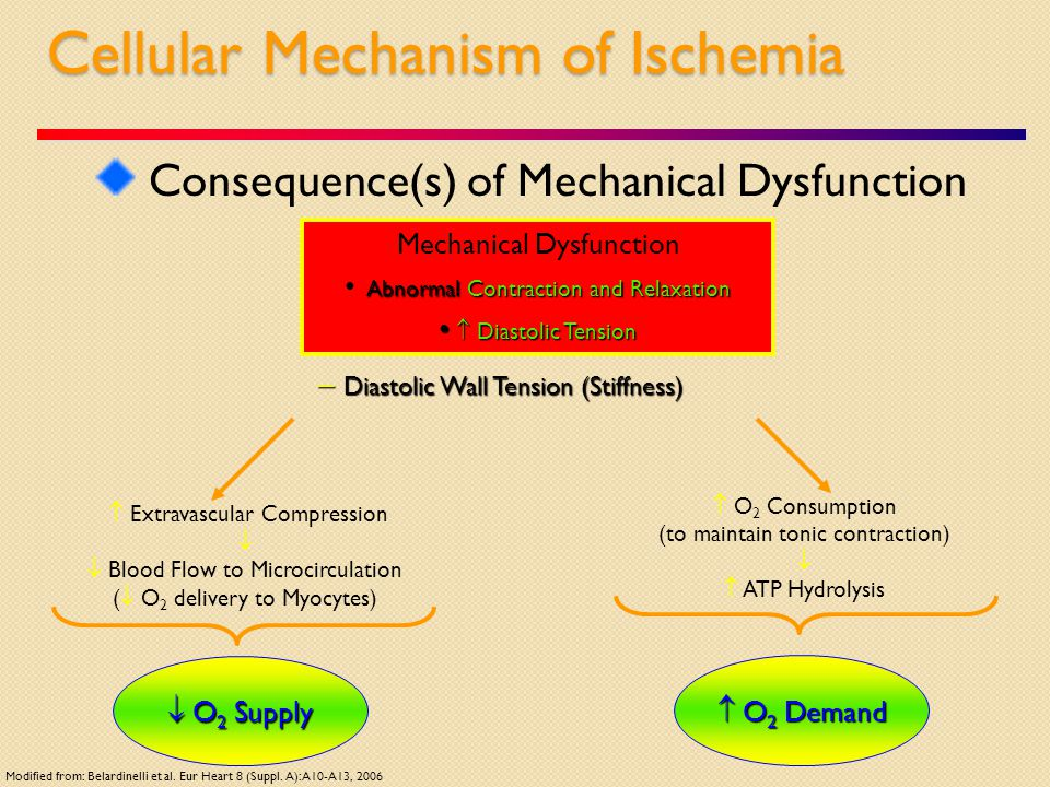Cellular Mechanism of Ischemia Consequence(s) of Mechanical Dysfunction Mechanical Dysfunction Abnormal Contraction and Relaxation  Diastolic Tension  Diastolic Tension  O 2 Consumption (to maintain tonic contraction)   ATP Hydrolysis  Diastolic Wall Tension (Stiffness)  O 2 Demand  O 2 Supply  Extravascular Compression   Blood Flow to Microcirculation (  O 2 delivery to Myocytes) Modified from: Belardinelli et al.