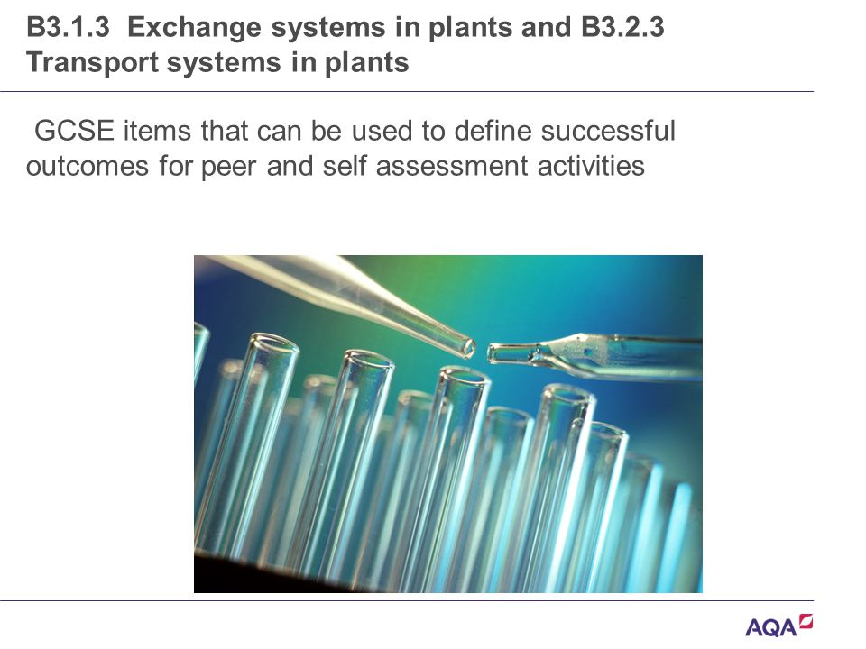 B3.1.3 Exchange systems in plants and B3.2.3 Transport systems in plants GCSE items that can be used to define successful outcomes for peer and self assessment activities
