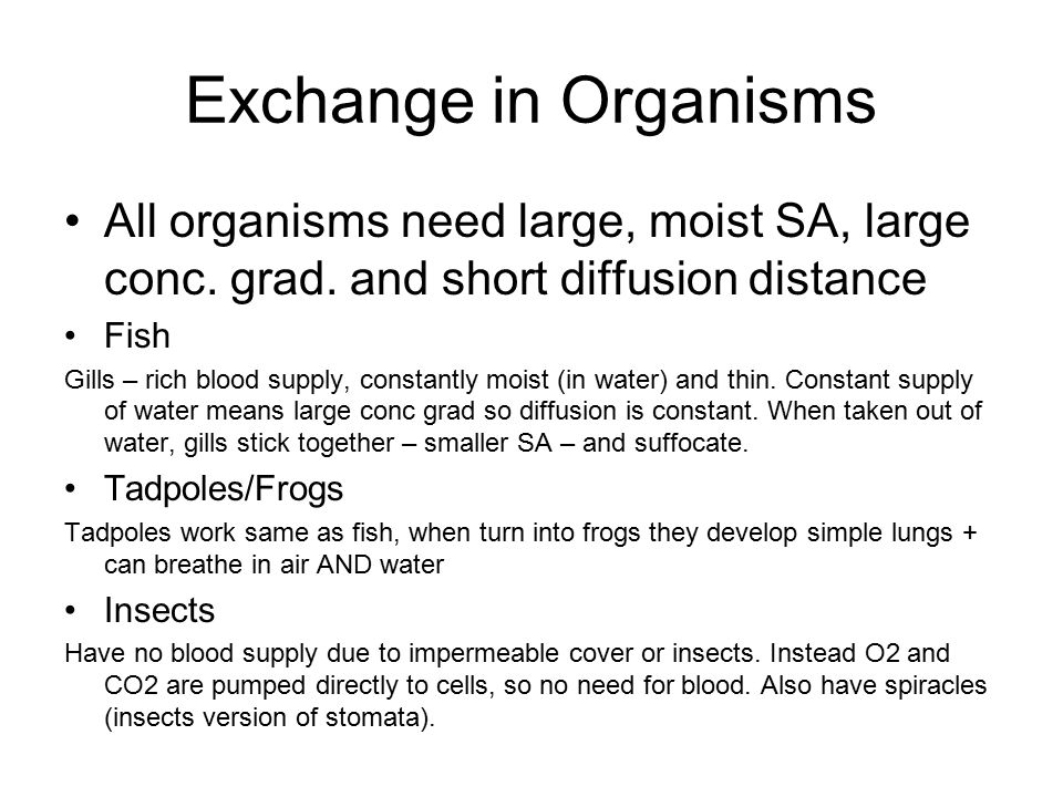 Exchange in Plants Need osmosis in roots (for water) and diffusion near stomata (for CO 2 ) Leaves thin + flat to increase SA for light and a waxy cuticle to prevent evaporation Root hair cells increase SA because of long, thin hairs Most minerals + ions needed taken through roots