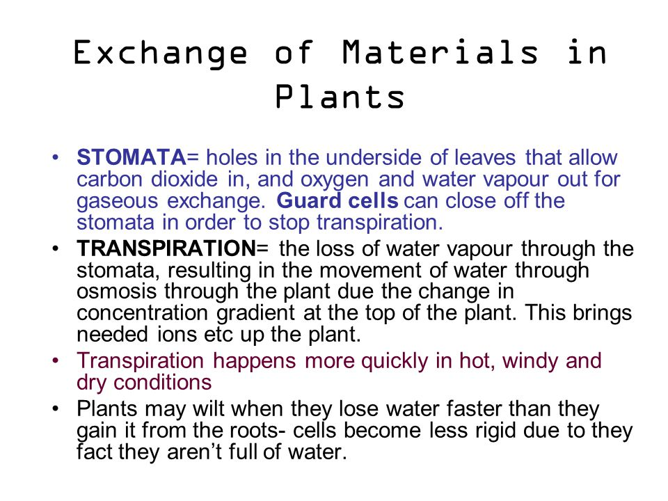 Exchange of Materials in Plants STOMATA= holes in the underside of leaves that allow carbon dioxide in, and oxygen and water vapour out for gaseous exchange.