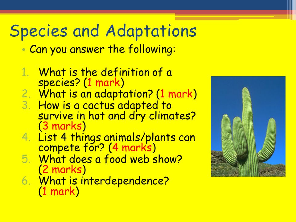 Species and Adaptations Can you answer the following: 1.What is the definition of a species? (1 mark) 2.What is an adaptation? (1 mark) 3.How is a cac