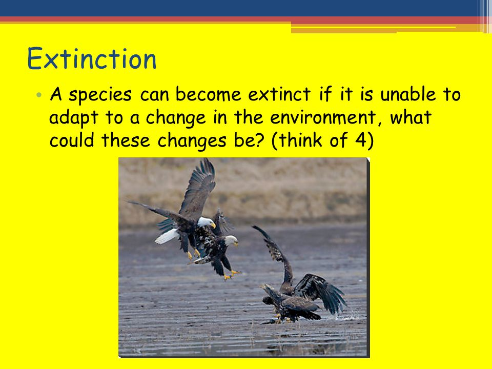 Extinction A species can become extinct if it is unable to adapt to a change in the environment, what could these changes be? (think of 4)