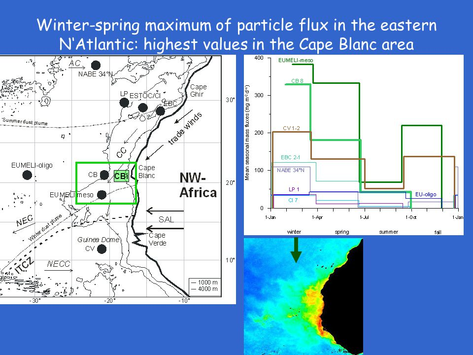 Winter-spring maximum of particle flux in the eastern N'Atlantic: highest values in the Cape Blanc area CBi