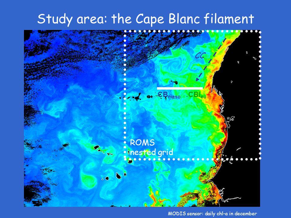 Study area: the Cape Blanc filament CB meso CBi eu MODIS sensor: daily chl-a in december ROMS nested grid CC