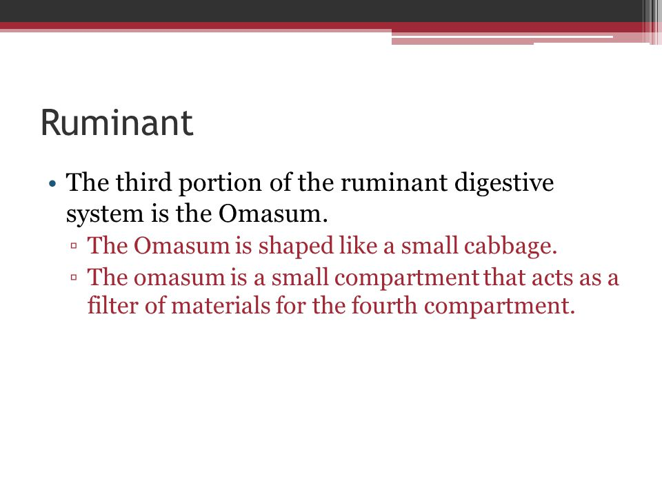 Ruminant The third portion of the ruminant digestive system is the Omasum. ▫The Omasum is shaped like a small cabbage. ▫The omasum is a small compartm