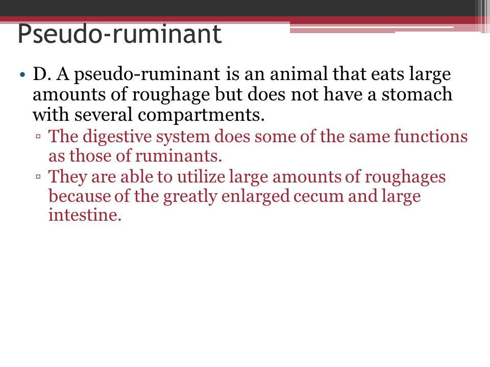 Pseudo-ruminant D. A pseudo-ruminant is an animal that eats large amounts of roughage but does not have a stomach with several compartments. ▫The dige