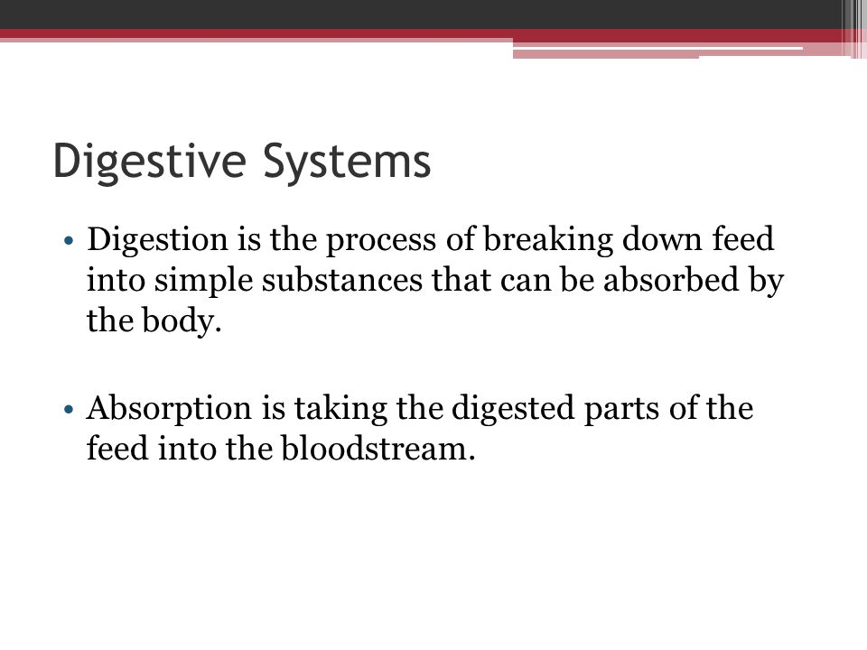 Review / Summary What are the various types of digestive systems found in animals.