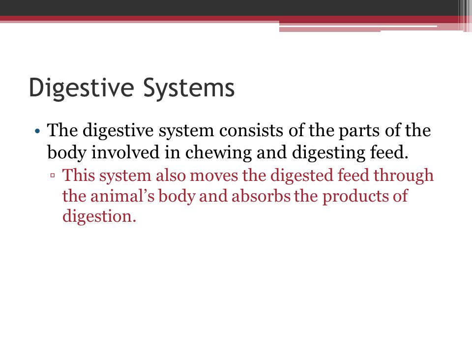 Small Intestine The partly digested feed that leaves the stomach enters the small intestine.