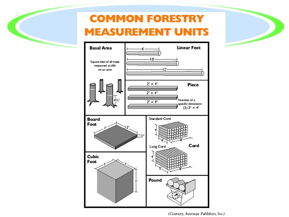 Common Units of Measure Used in Forestry? ·Timber trees are measured with a variety of units of measure. ·Some of these units are unique to the wood i