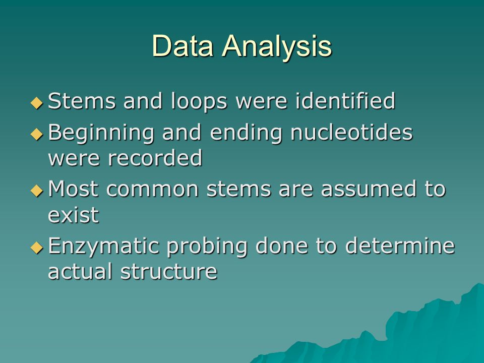 Data Analysis  Stems and loops were identified  Beginning and ending nucleotides were recorded  Most common stems are assumed to exist  Enzymatic probing done to determine actual structure