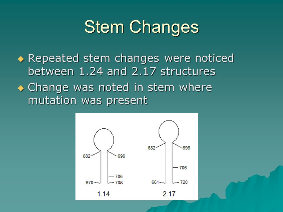 Stem Changes  Repeated stem changes were noticed between 1.24 and 2.17 structures  Change was noted in stem where mutation was present