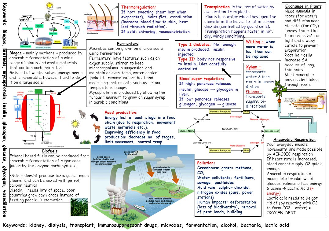 Food production: Energy lost at each stage in a food chain (due to respiration, movement waste materials etc.). Improving efficiency in food productio