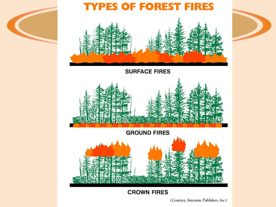 Crown fires ·Crown fires are the fastest spreading of all types of fires.
