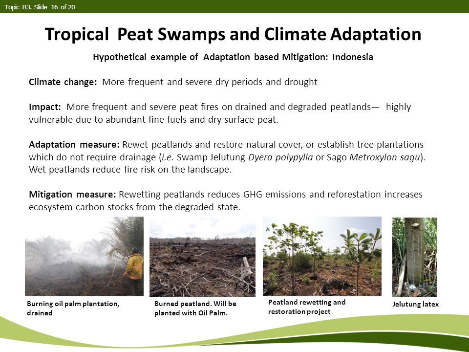 Tropical Peat Swamps and Climate Adaptation Topic B3.