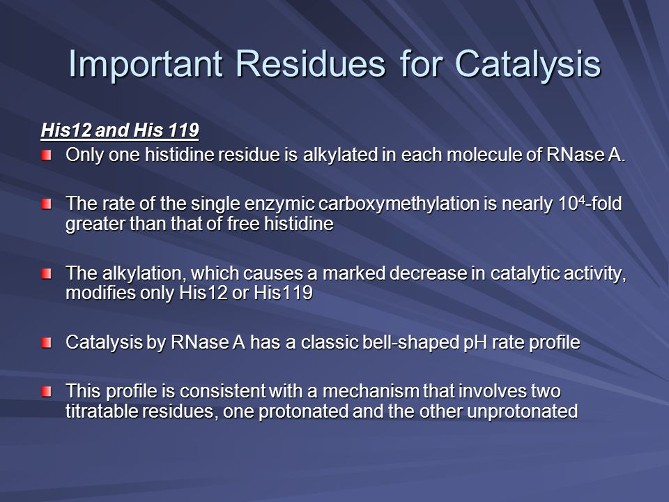 Important Residues for Catalysis His12 and His 119 Only one histidine residue is alkylated in each molecule of RNase A. The rate of the single enzymic