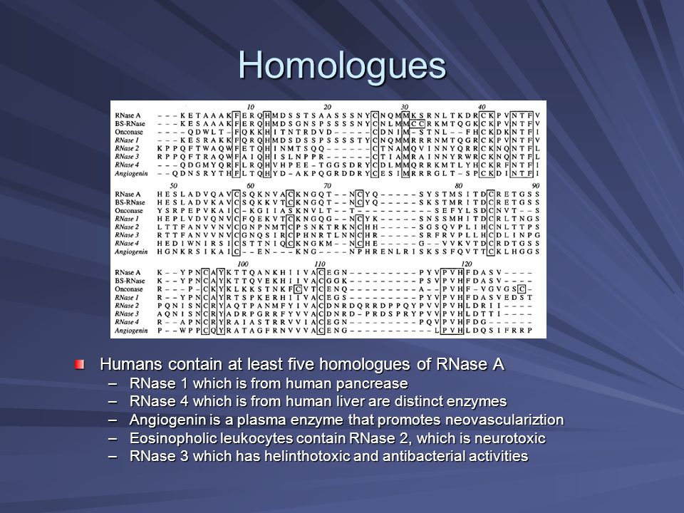 Homologues Humans contain at least five homologues of RNase A –RNase 1 which is from human pancrease –RNase 4 which is from human liver are distinct e