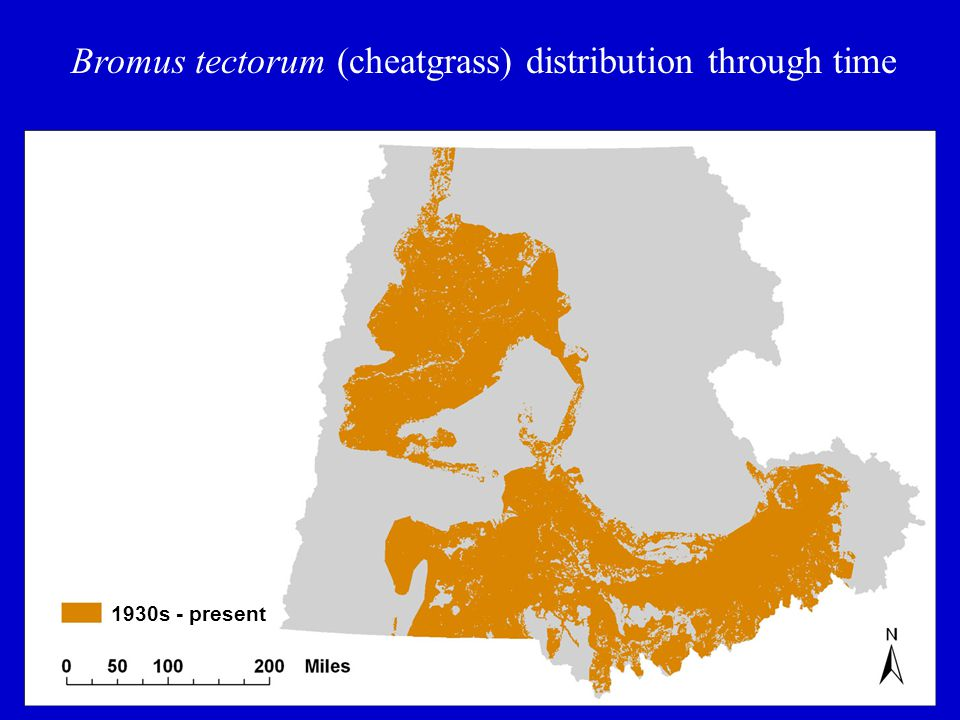 Bromus tectorum (cheatgrass) distribution through time 1930s - present