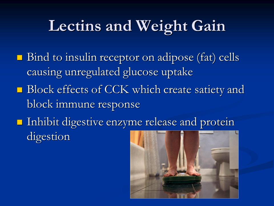Lectins and Weight Gain Bind to insulin receptor on adipose (fat) cells causing unregulated glucose uptake Bind to insulin receptor on adipose (fat) cells causing unregulated glucose uptake Block effects of CCK which create satiety and block immune response Block effects of CCK which create satiety and block immune response Inhibit digestive enzyme release and protein digestion Inhibit digestive enzyme release and protein digestion