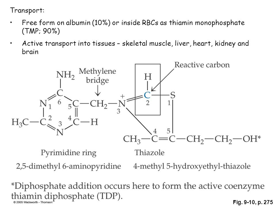 Fig. 9-10, p. 275 Transport: Free form on albumin (10%) or inside RBCs as thiamin monophosphate (TMP; 90%) Active transport into tissues – skeletal mu