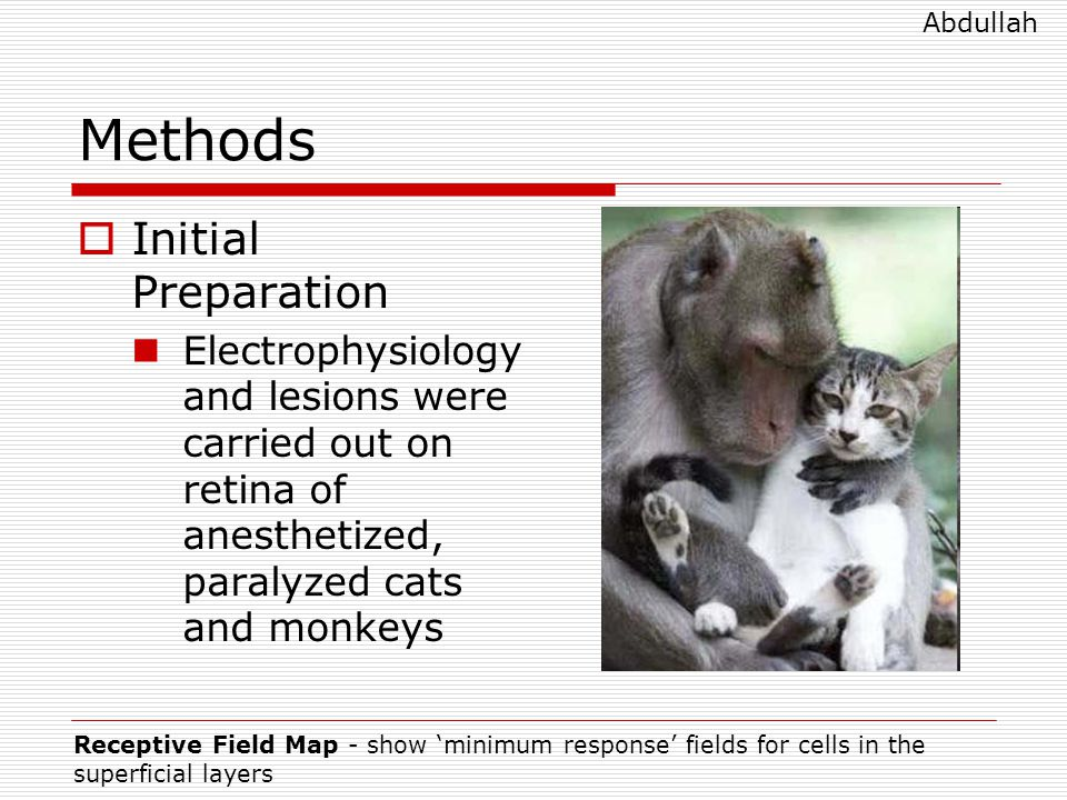 Methods  Initial Preparation Electrophysiology and lesions were carried out on retina of anesthetized, paralyzed cats and monkeys Receptive Field Map - show 'minimum response' fields for cells in the superficial layers Abdullah