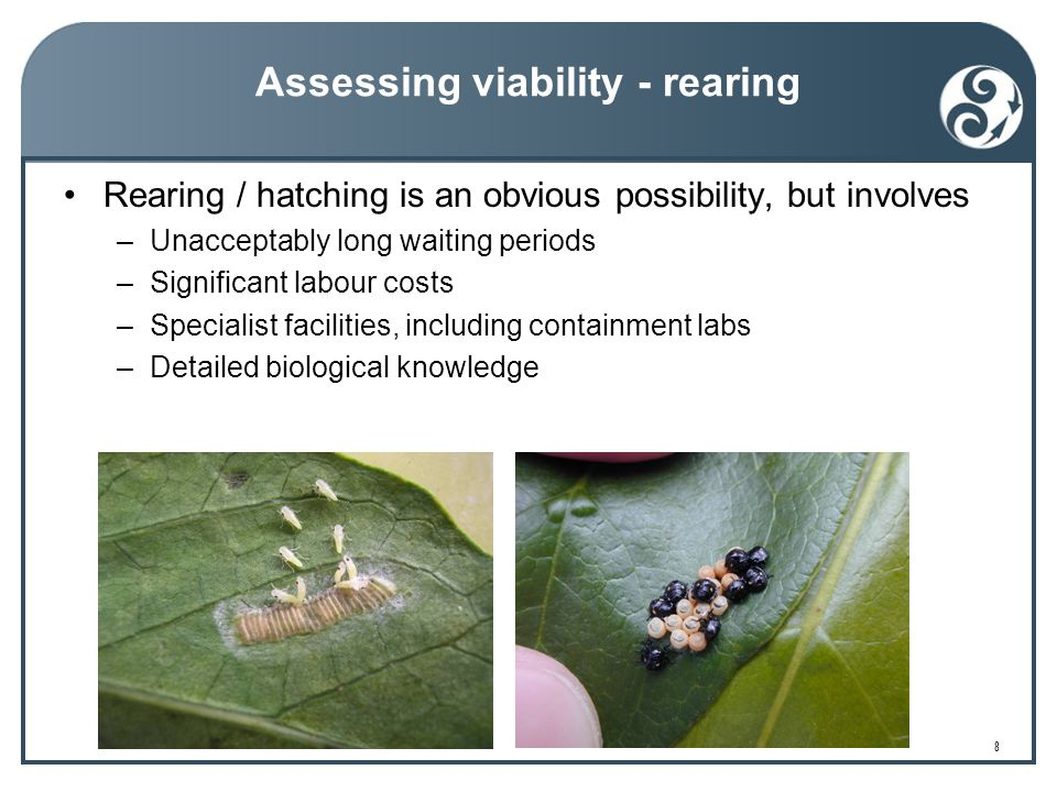 8 Assessing viability - rearing Rearing / hatching is an obvious possibility, but involves –Unacceptably long waiting periods –Significant labour costs –Specialist facilities, including containment labs –Detailed biological knowledge