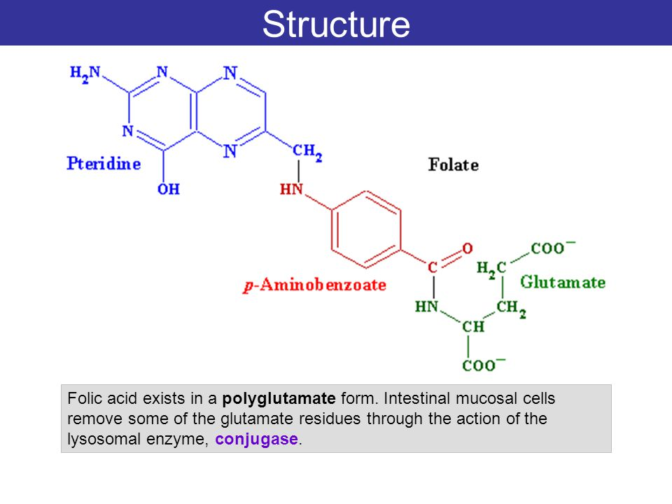 Structure Folic acid exists in a polyglutamate form. Intestinal mucosal cells remove some of the glutamate residues through the action of the lysosoma