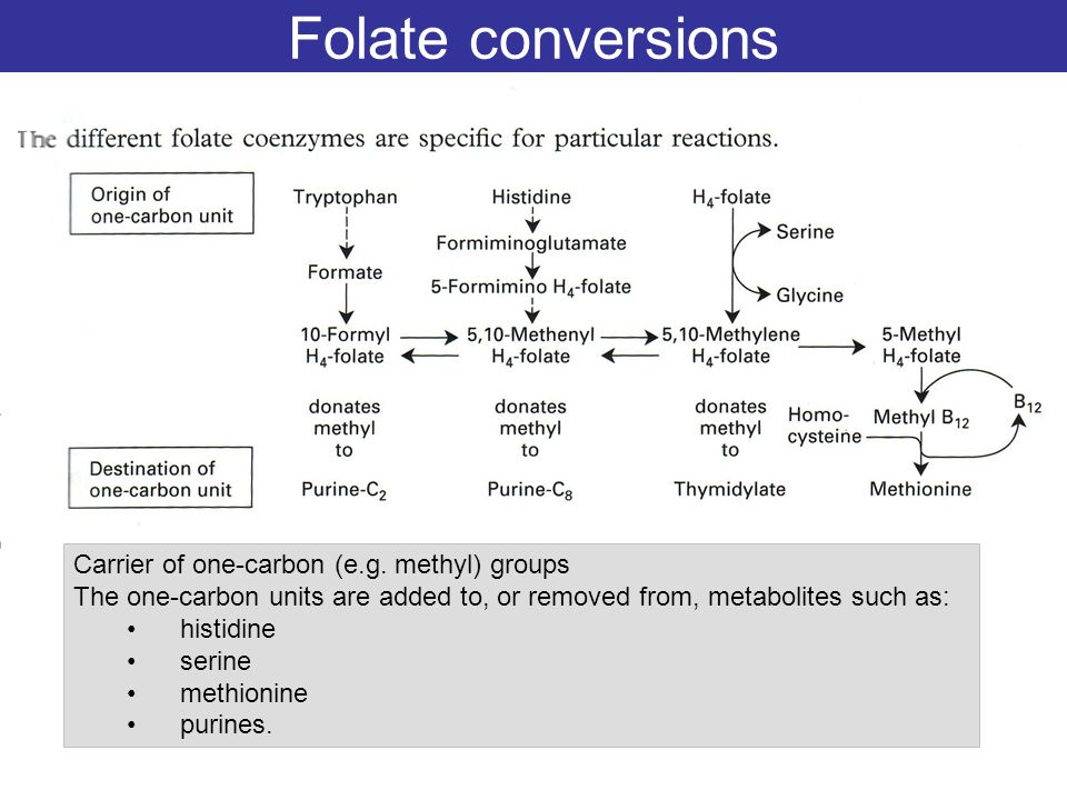Folate conversions Carrier of one-carbon (e.g. methyl) groups The one-carbon units are added to, or removed from, metabolites such as: histidine serin
