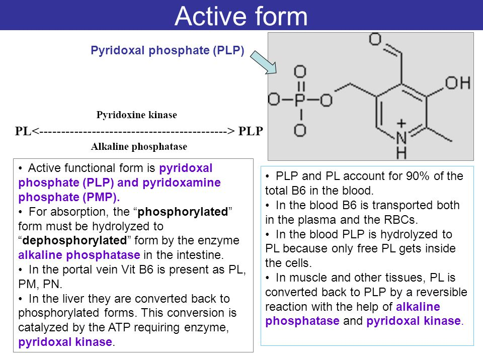 Active form Pyridoxal phosphate (PLP) PLP and PL account for 90% of the total B6 in the blood. In the blood B6 is transported both in the plasma and t