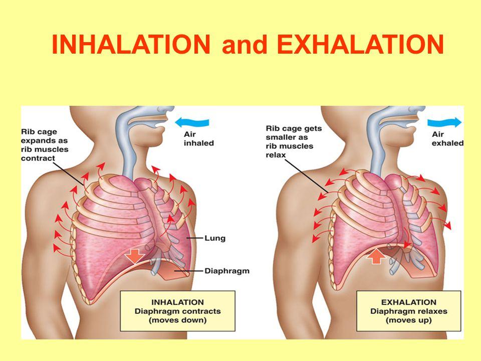 INHALATION and EXHALATION