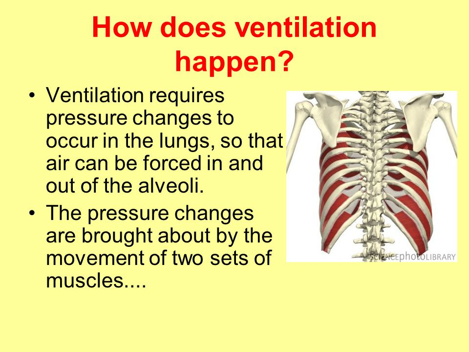 How does ventilation happen? Ventilation requires pressure changes to occur in the lungs, so that air can be forced in and out of the alveoli. The pre