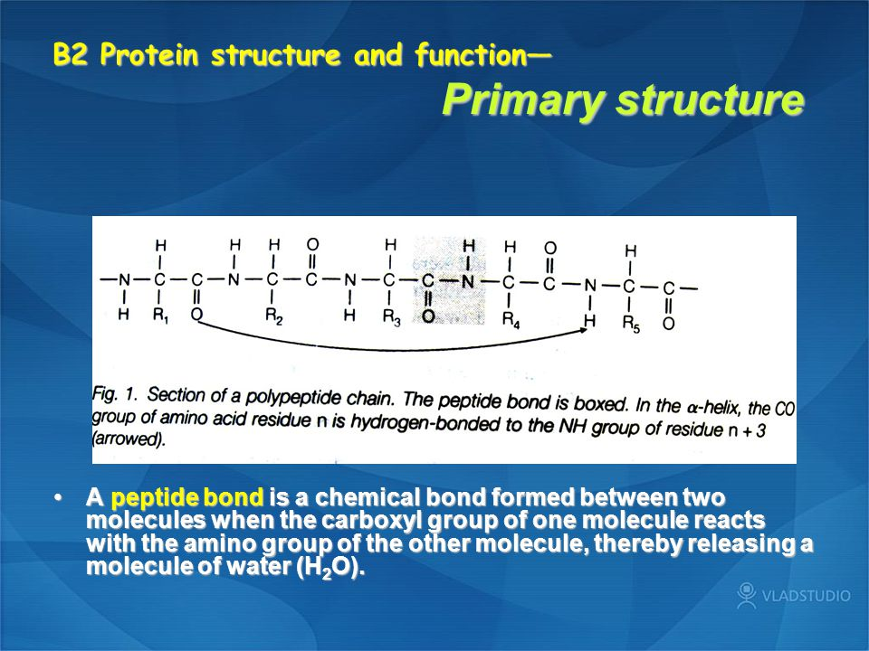 B2 Protein structure and function— Primarystructure B2 Protein structure and function— Primary structure A peptide bond is a chemical bond formed between two molecules when the carboxyl group of one molecule reacts with the amino group of the other molecule, thereby releasing a molecule of water (H 2 O).A peptide bond is a chemical bond formed between two molecules when the carboxyl group of one molecule reacts with the amino group of the other molecule, thereby releasing a molecule of water (H 2 O).