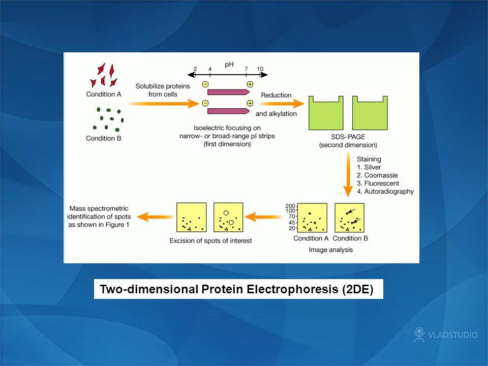 Two-dimensional Protein Electrophoresis (2DE)