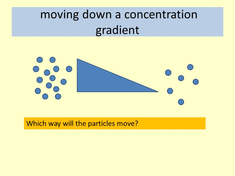 moving down a concentration gradient Which way will the particles move?